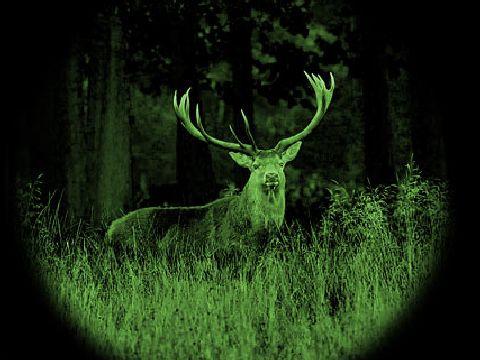 4 braconieri de noapte prinsi cu un cerb ucis asupra lor